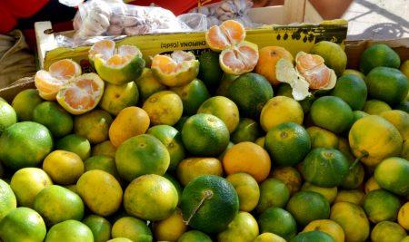 Los naranjos de Jerez
